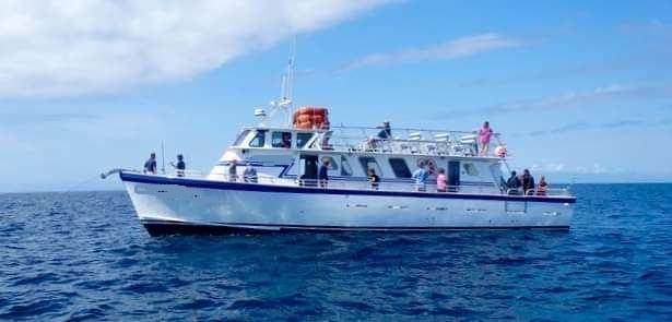 65' Arrow Head Boat 1996 Charter Party Deep Sea Fishing For Sale